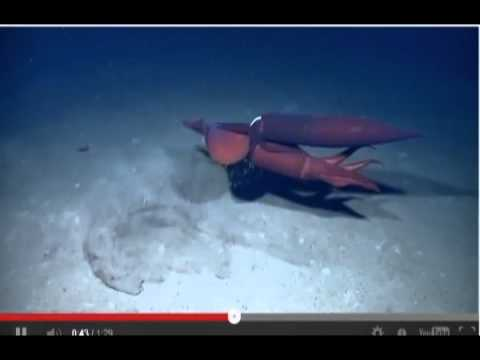 Squid Love ** Warning!! Explicit Sexual Content