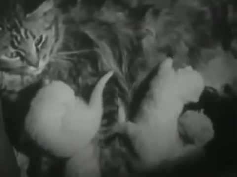 Pat Vollmer Vs. The Private Life Of A Cat (DJ Mix/Video Re-Soundtracked)