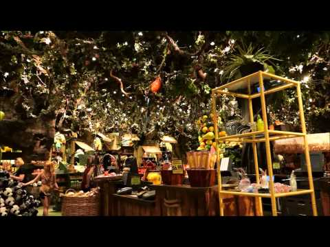 Rainforest Cafe, Disney's Animal Kingdom, Walt Disney World Resort