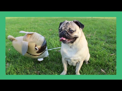 Thumbnail Doug The Pug And His Imaginary Friend