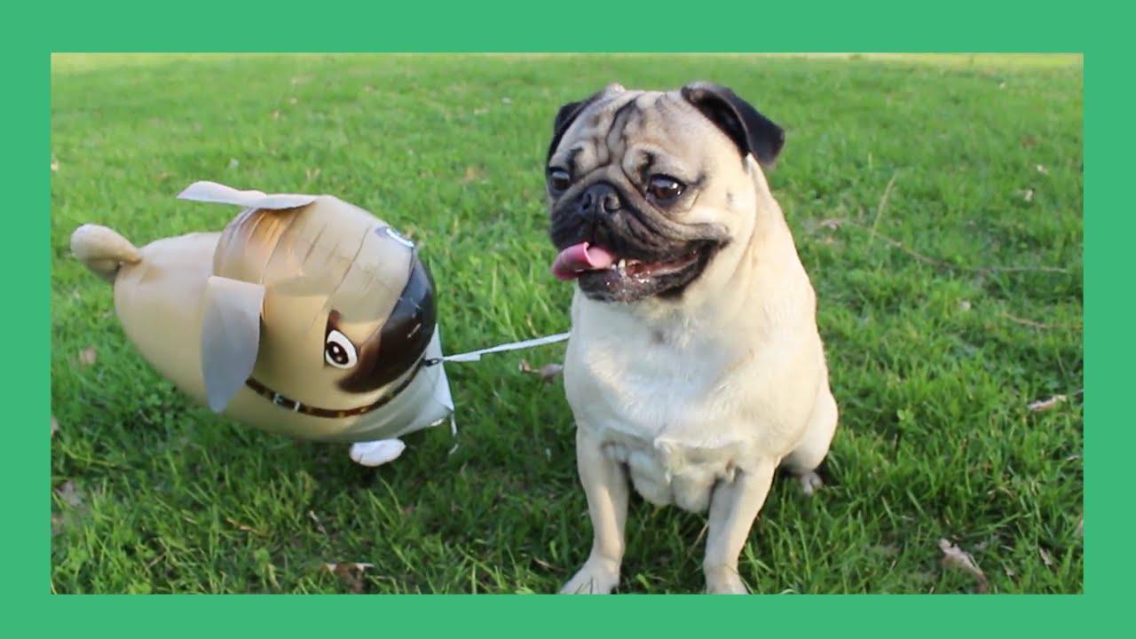Cute Pug Wallpaper Cartoon Doug The Pug And His Imaginary Friend Youtube