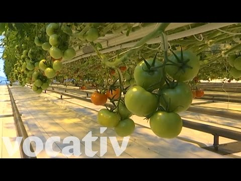 These Tomatoes Can Grow In Siberia