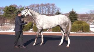 クリエイター2(Creator) - JBBA日本軽種馬協会種牡馬展示会2017