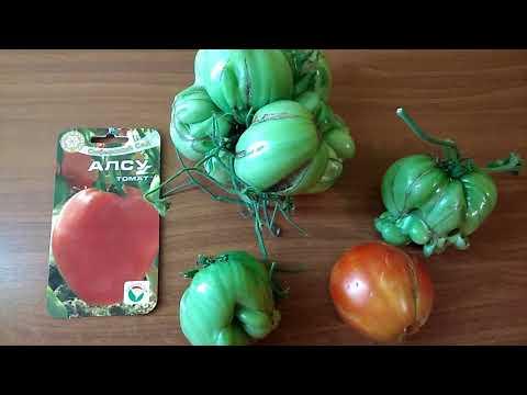 Обзор сорта томата Алсу | загородная | кулинария | заготовки | рассада | покупки | деревня | огород | маркиз | томат | отдых