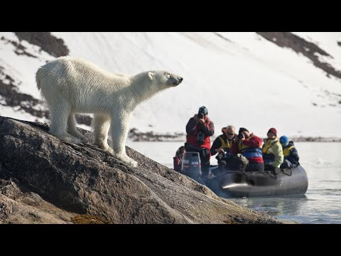 POLAR BEAR VOYAGE! Spitsbergen/Svalbard