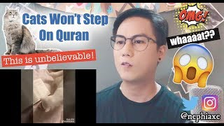 Cats Will Not Walk on The Quran, experiment with 5 cats | REACTION