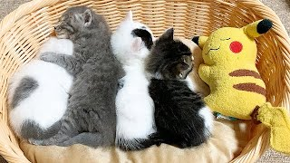 新しいベッドが気に入った赤ちゃん猫