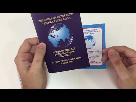 Как правильно заполнить ветеринарный паспорт кошки образец