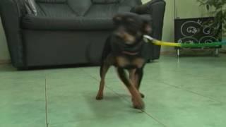 Почему собака справляет малую нужду в квартире?