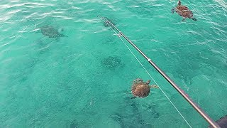바다 거북들  틈 사이로 낚시 를 내려 보았더니 ??