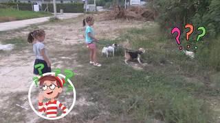 Мила и Ника моют собак Kids wash dogs. เด็ก ๆ ล้างสุนัขโปรดเข้าร่วมกับเรา - มันสนุก