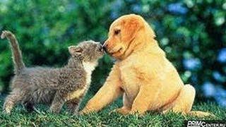 Кошки против собак !)))))))))))))))0 Позитив!!!