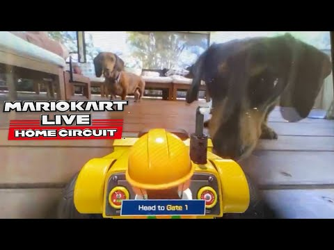 Mario Kart Live: Home Circuit - DECK, RAMPS and DOGS!