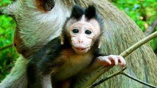 AHa!! Baby Milto Say Hello To Me !! | Baby Milto Very Smart and Fri...