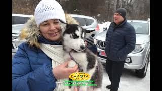 #Winterdogfest 2019, Харьков, 02022019, собаки, короткий репортаж слайд шоу