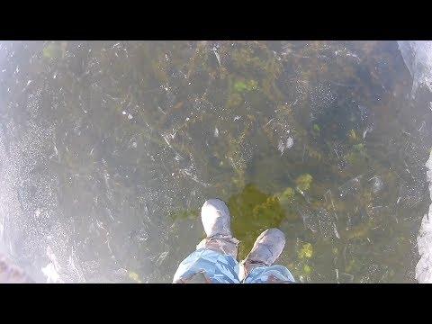 Первый лёд   Жор щуки и окуня на болоте озеро Тростенское Зимняя рыбалка  в Подмосковье