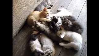 коты,цыплята,деревня