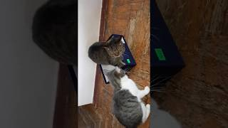 КоТиГад приколы с котами котики дерутся за коробку,funny video with cat