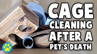 How To Clean A Deceased Pets Cage (To Prepare For A New Pet)