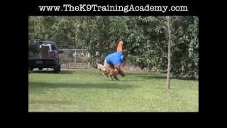K9 Protection Training The K9 Training Academy Resort Sunrise Florida
