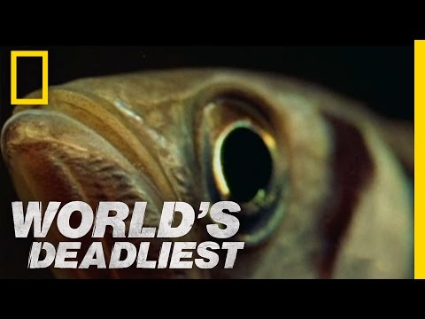"Fish ""Shoots"" Prey with Water 