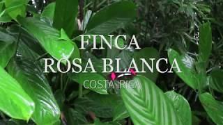 Finca Rosa Blanca Coffee Plantation Resort (San Jose, Costa Rica)