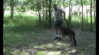 Дрессировка собак ОКД собак  Базовое упражнение 9  Смена мотиваций