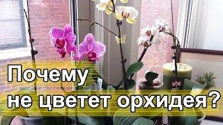 Почему не цветет орхидея.(, 2016-11-29T11:58:20.000Z)