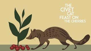 Civet Cat Coffee Bean Process (Iteration1)