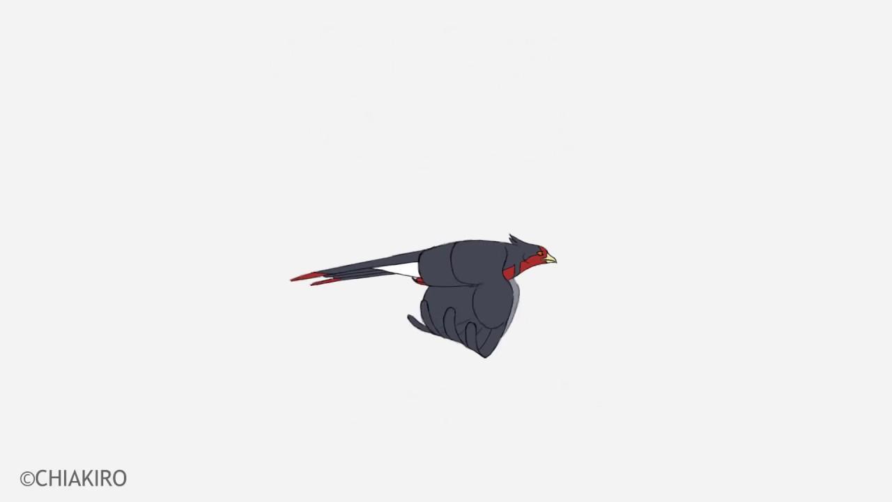 Bird Flight Cycle Animation Youtube