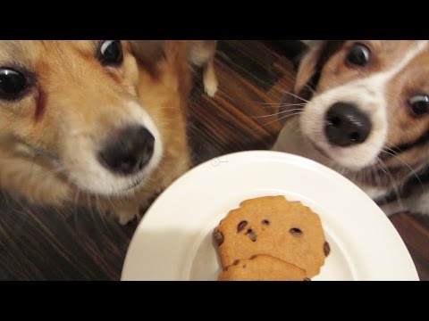 MINECRAFT DOG BISCUITS - MONDAY VLOG
