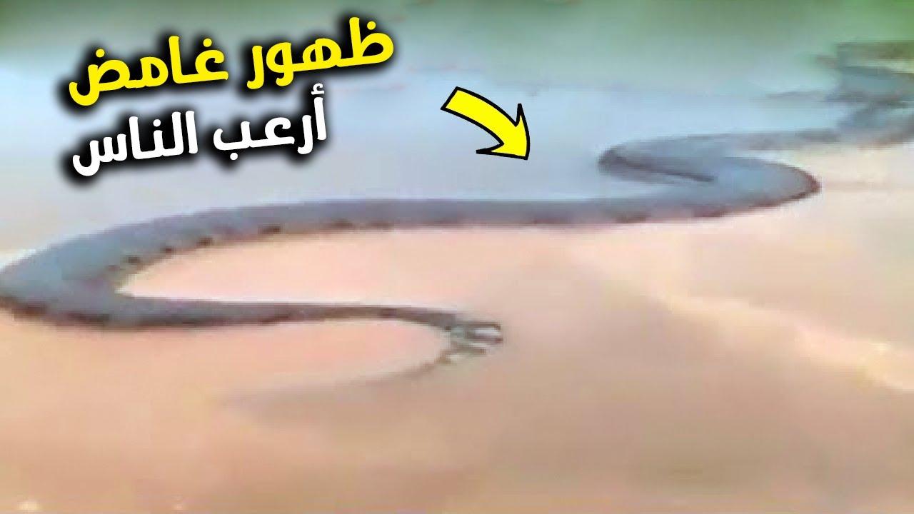 ظهور الأفعى العملاقة على الشاطئ يسبب الرعب لمستخدمي الإنترنت !!!