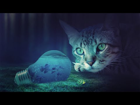 Cat Photoshop Manipulation Tutorial
