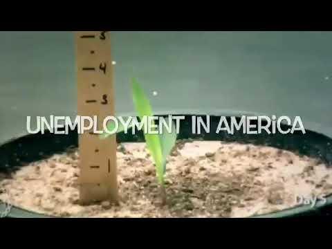 Unemployment Satire Project Acchs Youtube