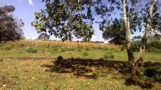 Video of Agricultural land for long term lease in Tigoni Limuru