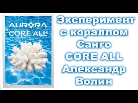 Коралл Санго - Эксперимент с кораллом - Александр Волин 💧