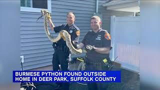 Large snake found outside home on Long Island