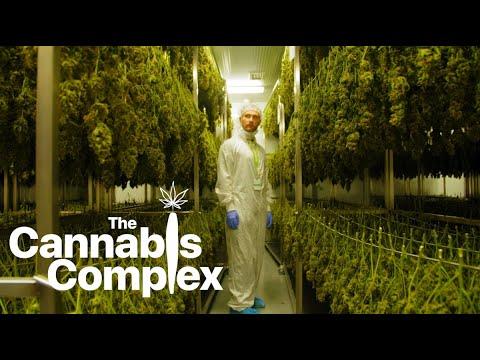 The Cannabis Complex    |     Episode 1