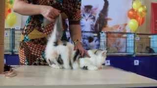 Выставка кошек. Казахстан, Алматы