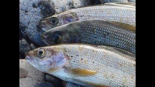 Наконец то ловля хариуса по открытой воде Весенняя рыбалка 2019 на хариуса успешно открыта