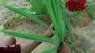 Diy Snake Trap Technology - Learning to make PVC Pipe snake trap