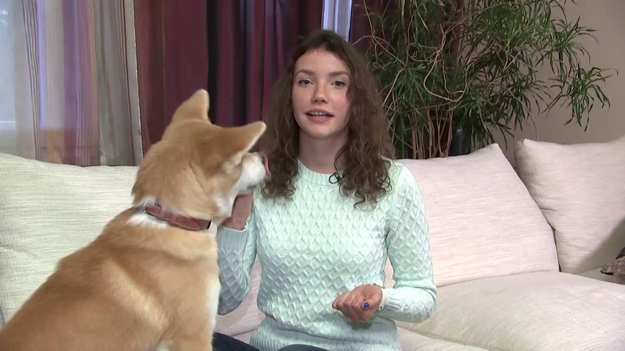 Собаки и щенки породы акита. На доске объявлений olx беларусь легко и быстро можно купить щенка акита-ину. Заведи друга прямо сейчас!