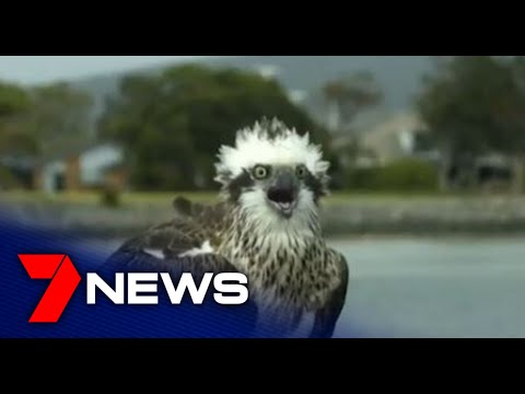 Bird Lovers Can Monitor The Progress Of Endangered Species Live On The Web | Adelaide |7NEWS