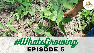 EP 05 | #WhatsGrowing in our Nesting Boxes [12.07.2020]