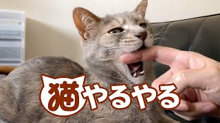 猫やるやる - Typical Cat Owner -