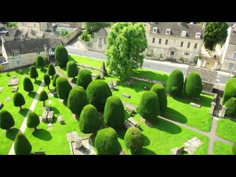 A focus on Yew hedging: All you need to know about Taxus Baccata