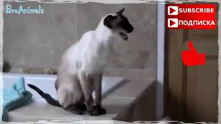 Funny animals Part 2// 2019