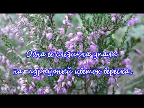Легенды о цветах  Вереск