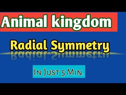 Animal Kingdom/ Symmetry/ Radial Symmetry/ NEET/ AIIMS