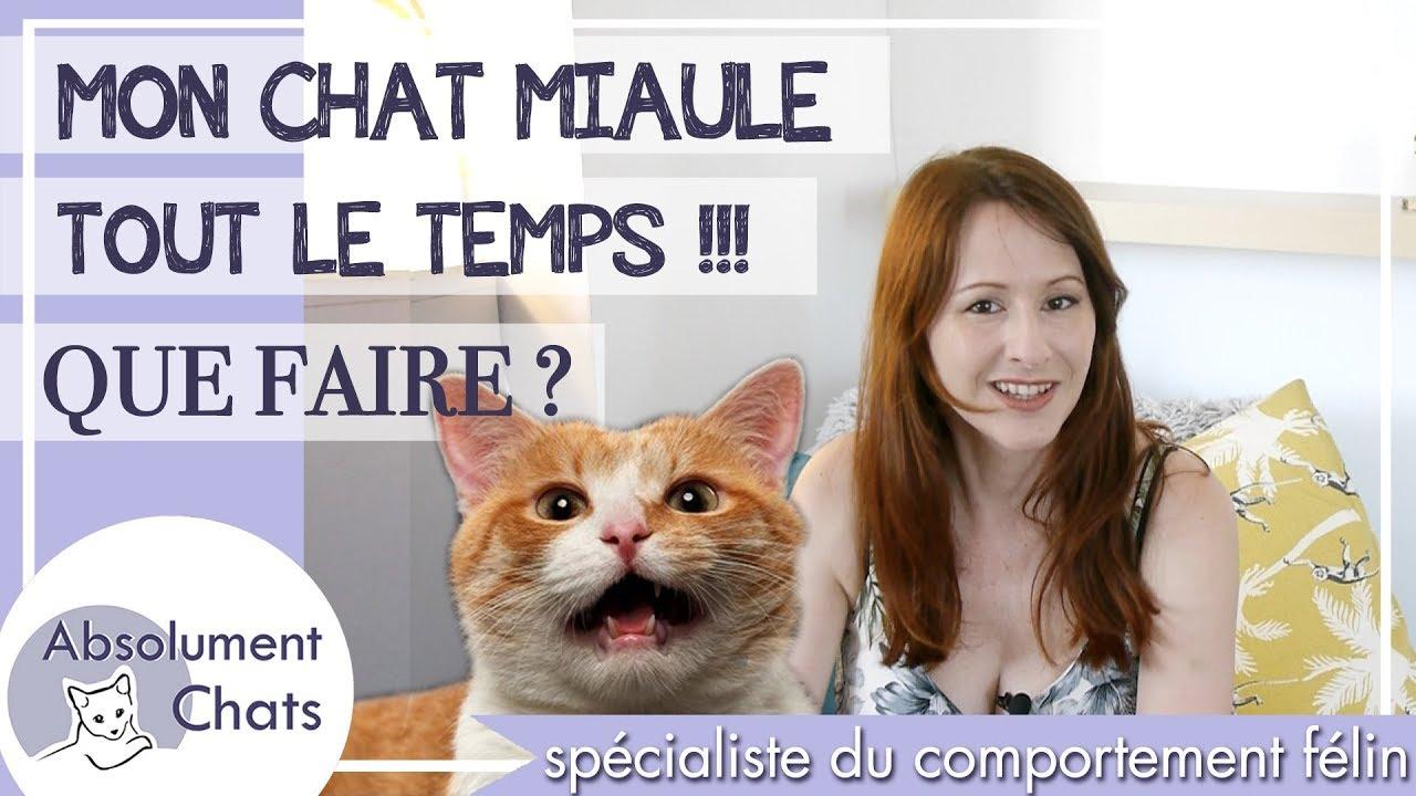 Mon Chat Dort Sur Mes Pieds mon chat miaule tout le temps que faire ?